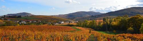 visiter-Vignoble_beaujolais
