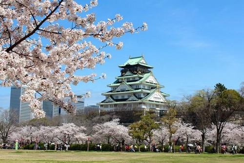 visiter-osaka-cerisier-japon