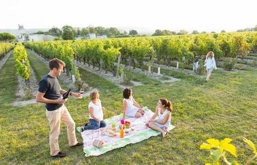 Pique-nique-famille-vignes-bordeaux-wine-tour