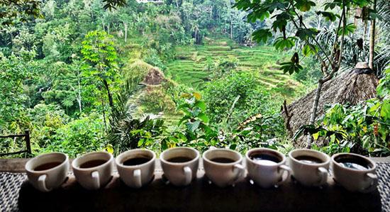 Luwak-Cafe-Ubud-Bali
