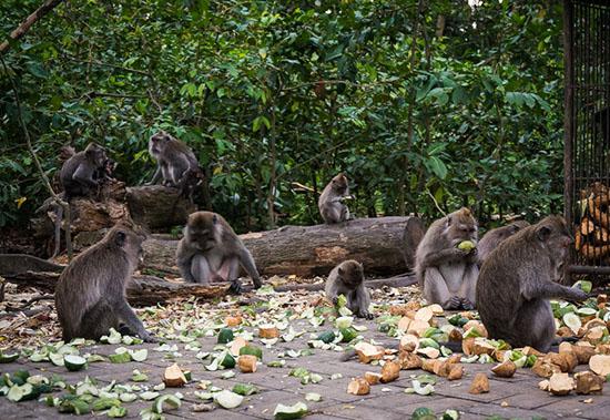 foret-des-singes-Ubud-Bali