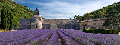 visiter-Abbaye-Senanque-champs-lavande-lavendou