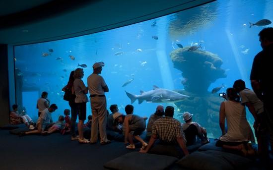palma-aquarium
