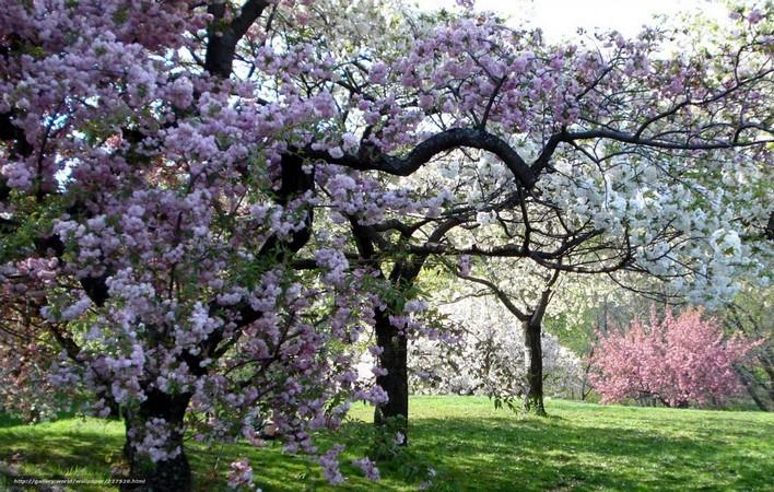 Jardin-botanique-du-Bronx-new-york