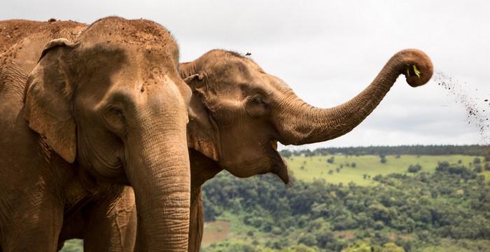 elephant-trekking-mondolkiri