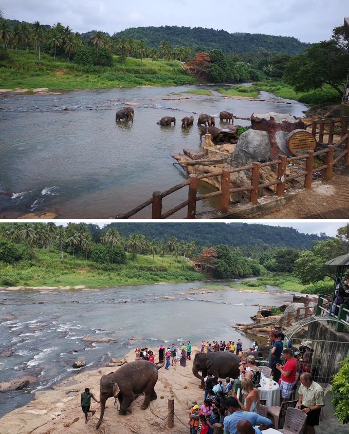 meilleurs-ville-pour-voir-elephant-sri-lanka