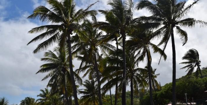 plage-grande-Anse-Sud-Reunion