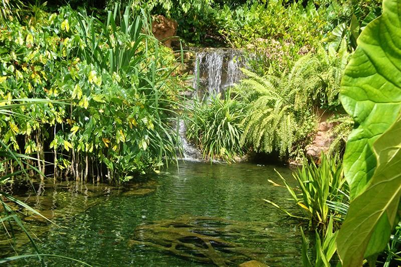 visiter-Orchid-Garden-singapour