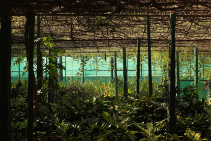 jardin-botanique-quartier-mg-road-churchstreet-bangalore