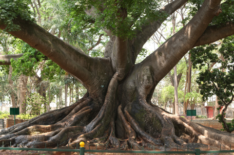 visiter-cubbon-park-sri-chamarajendra-bangalore