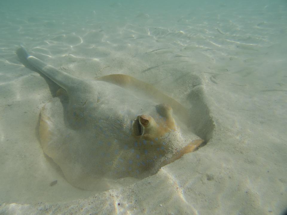 coral-bay-australie