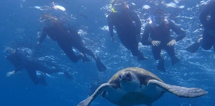 excursion-dauphins-tortues-los-cristianos