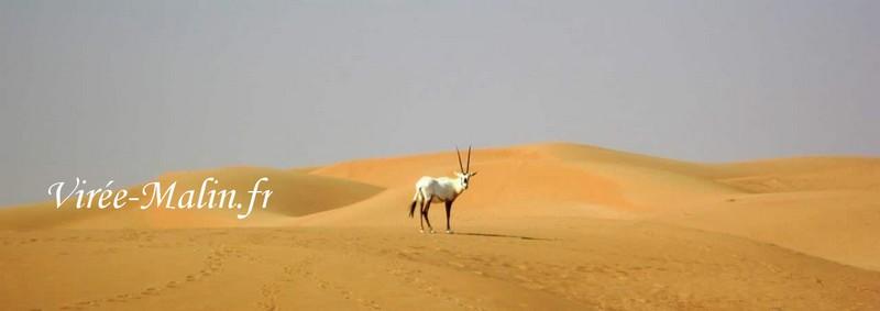 oryx-dubai-desert