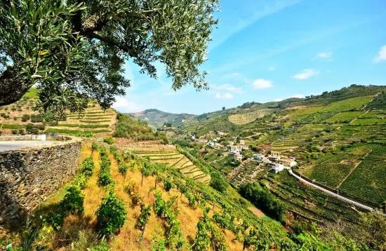 Excursion exceptionnelle dans la Vallée du Douro depuis Porto en Français