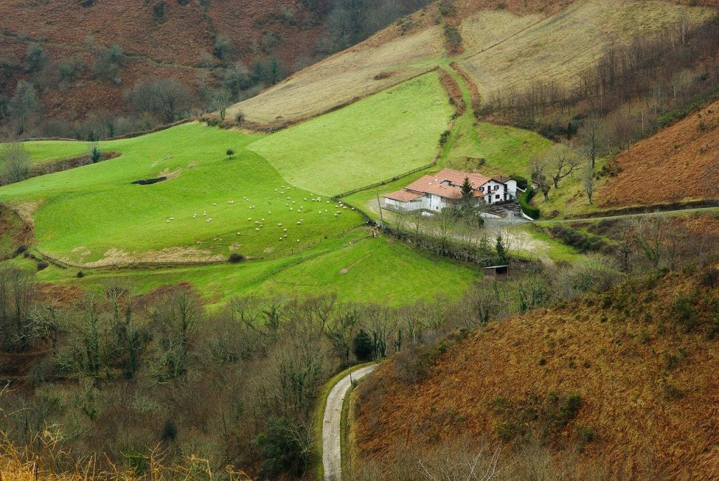 sentier-nature-foret-pays-basque