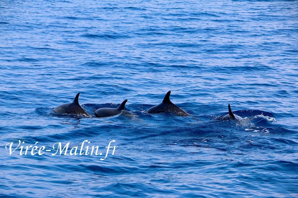 voir-dauphin-depuis-samara-avec-skippeur-francophone