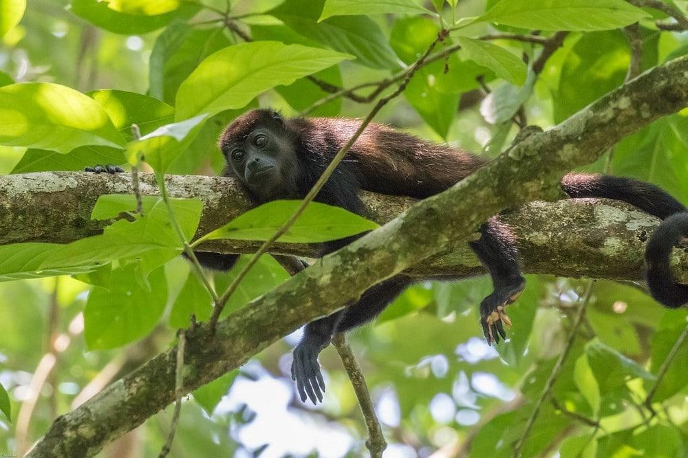 voir-singe-foret-depuis-samara-guide-francophone