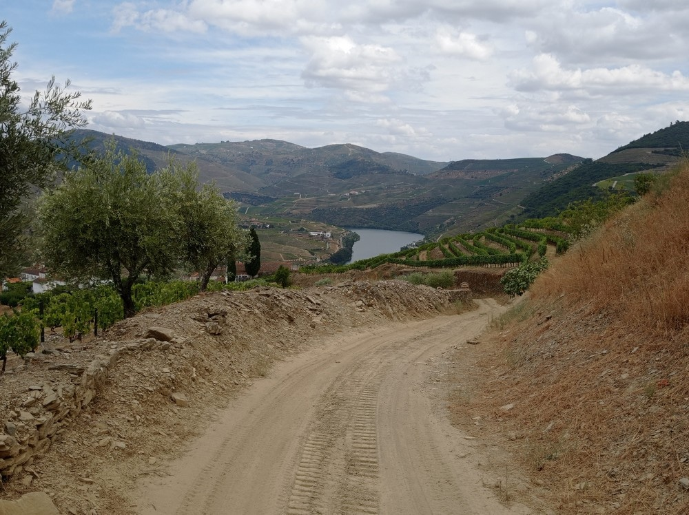 wine-tour-vallee-douro-chauffeur-francophone