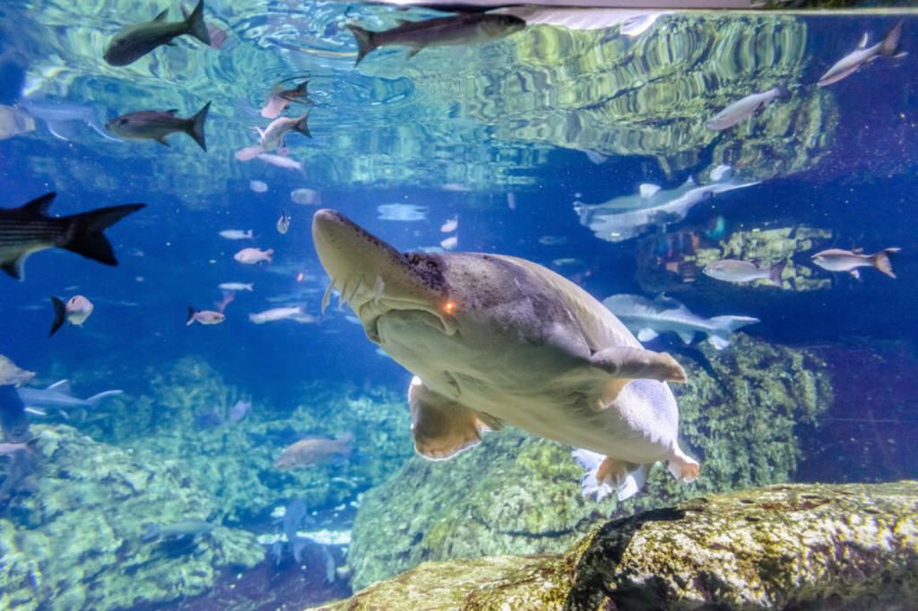 activite-barcelone-aquarium-billet-coupe-file