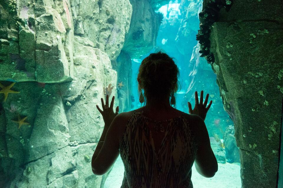 activite-lisbonne-oceanarium