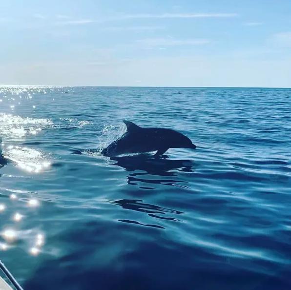 grand-dauphin-dans-la-reserve-de-scandola