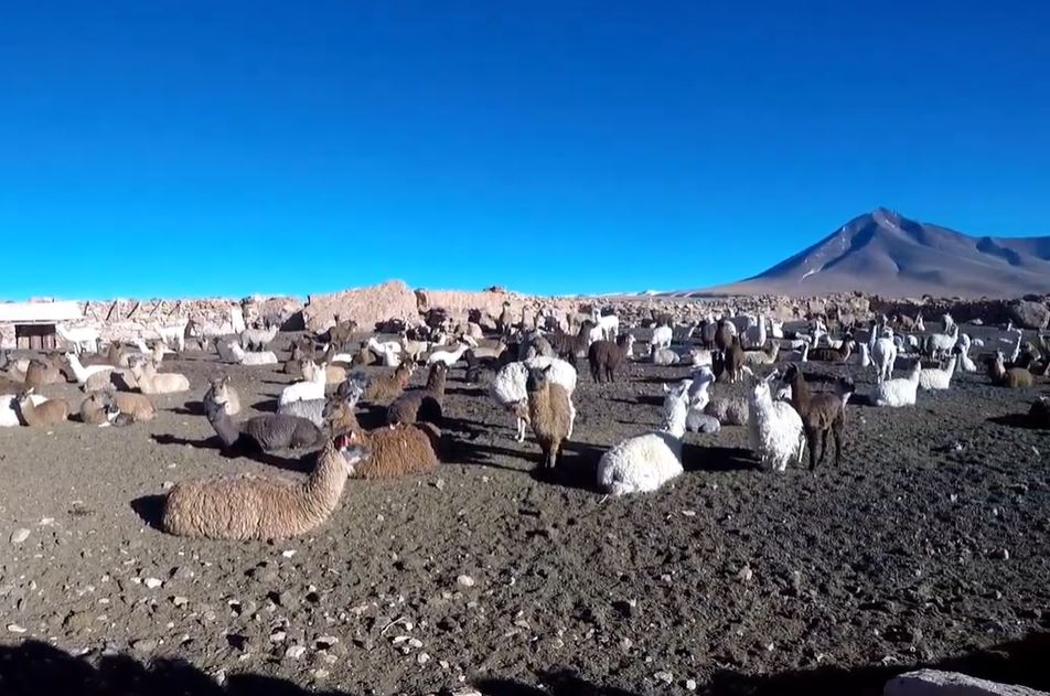 circuit-sud-bolivie-desert-sel-uyuni